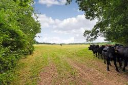 Land For Sale  Horsham West Sussex RH13
