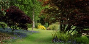 Property News - Gardens are key to maximising values